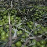 Trump hits Spanish olives with US import duty