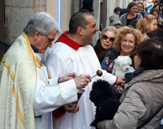 Blessed are the animals: Madrid church welcomes four-legged friends