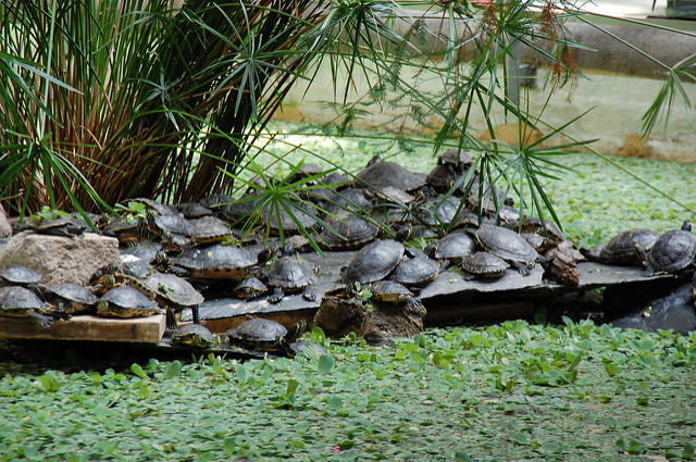 Madrid's Atocha railway station is about to lose its famous turtles