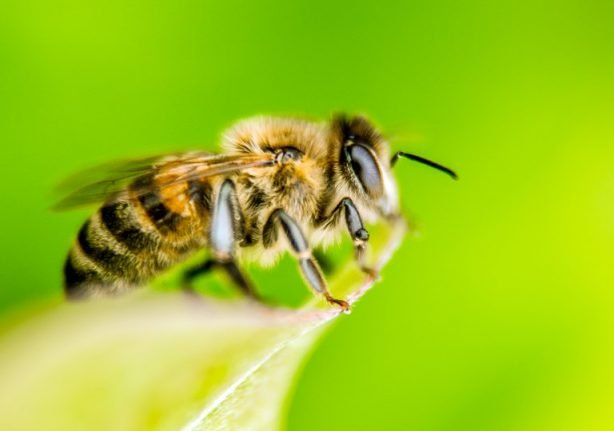 Woman dies in Spain after 'bee sting' alternative therapy