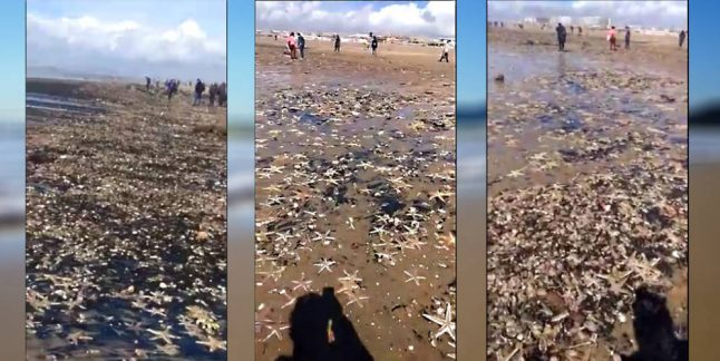 Thousands of starfish wash up in Andalusia after 'Beast of the East'
