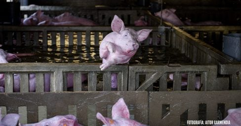 Thousands of farm animals left to drown as River Ebro burst its banks