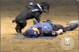 VIDEO: Meet Poncho, the Madrid police dog who performs CPR