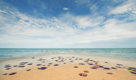 Authorities scoop ELEVEN tonnes of jellyfish from Costa del Sol beaches