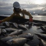 Galicia fishermen could lose €500m a year with no-deal Brexit