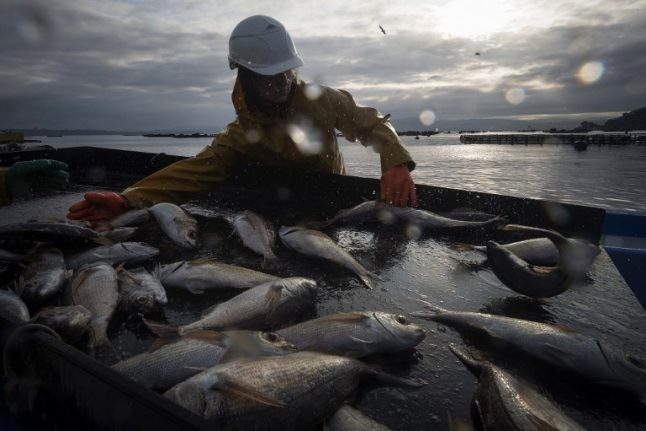 Brexit: Spain confident Galician fishing fleet won't be kept out of British waters