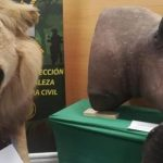 Lions and tigers and bears... oh my! Spanish police raid illegal taxidermist