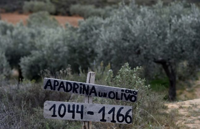 Adopt an olive tree: Breathe new life into rural Spain