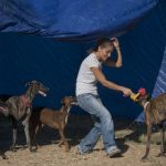 Spain urged to stop 'torture' of unwanted greyhounds
