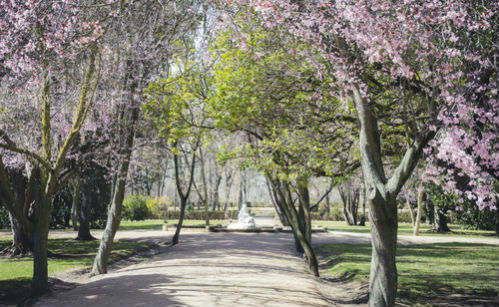 Seven glorious ways to celebrate spring in Spain