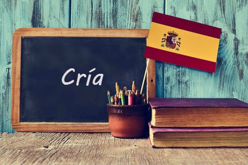 Spanish word of the day: 'Cría'