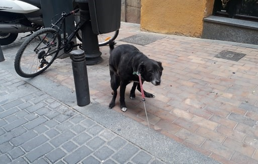 Spanish town hires pet detectives in latest battle against dog poo