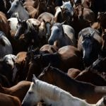 Spanish police arrest Dutchman wanted over Europe-wide horsemeat scandal