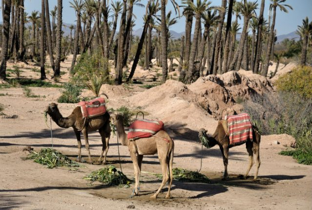 Climate crisis: Madrid to be as hot as Marrakesh within 30 years