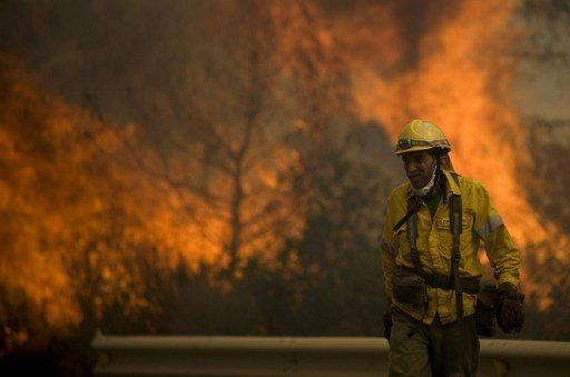 Dozens evacuated in Costa del Sol wildfire sparked by Frenchman burning a beehive