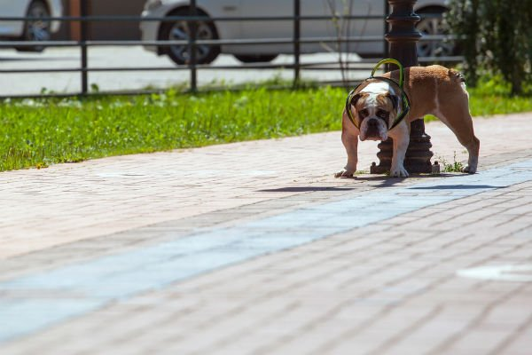 Seville wants owners to rinse away dog pee