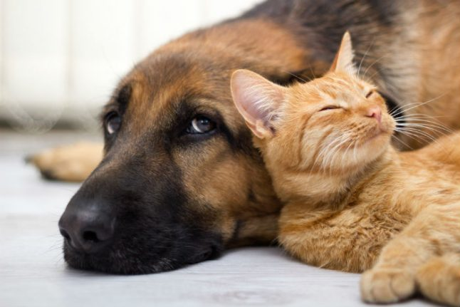 Just how much do the Spanish really love their pets?