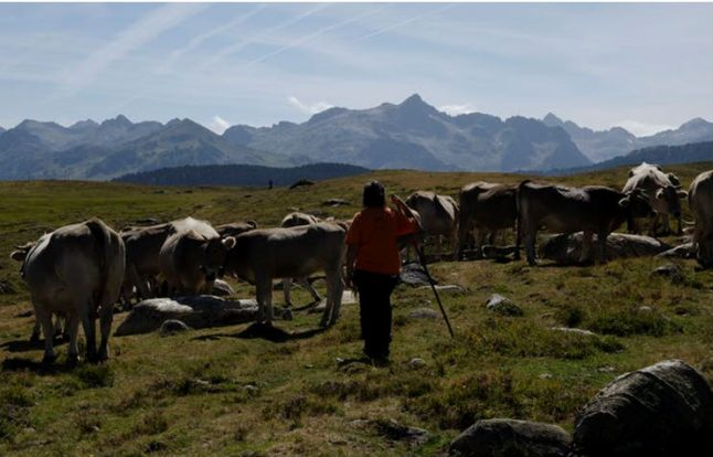 Taking back the hills: a tale of women, rights and lands in the Catalan Pyrenees