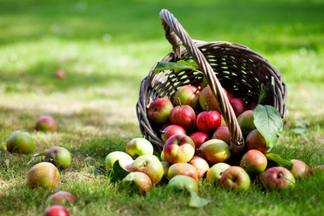 An Aussie in Galicia: Seasonal change and a bumper apple harvest