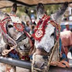 Finally, Costa del Sol town imposes weight limit on donkey rides