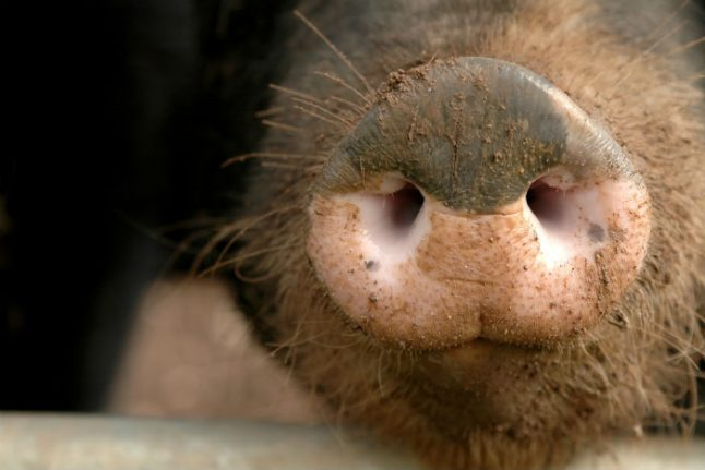 Living in Spain: What to do with a dilapidated Galician farmhouse that housed pigs for decades?
