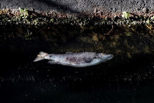 Dead fish wash up in river in Spain after waste plant fire