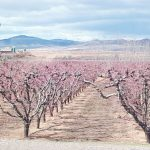 IN PICS: Ten photos that will make you excited about spring in Spain