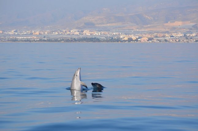 What's the truth behind claims that Spain's marine wildlife is thriving during lockdown?