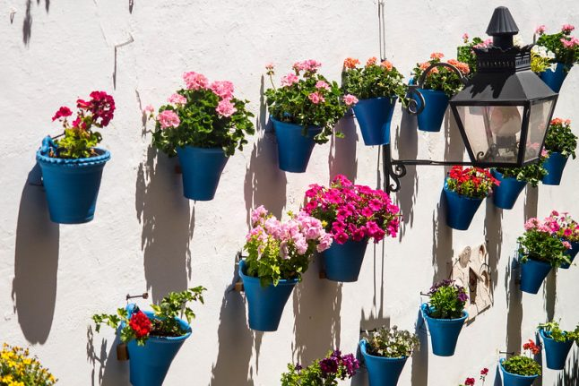 How to enjoy the blooming gorgeousness of Cordoba's Patio Festival without leaving home