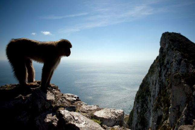 How Gibraltar is moving to protect its monkeys against coronavirus