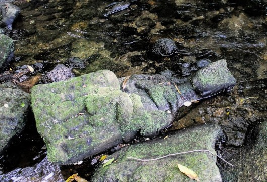 Fisherman finds priceless medieval religious icon on Spanish riverbed