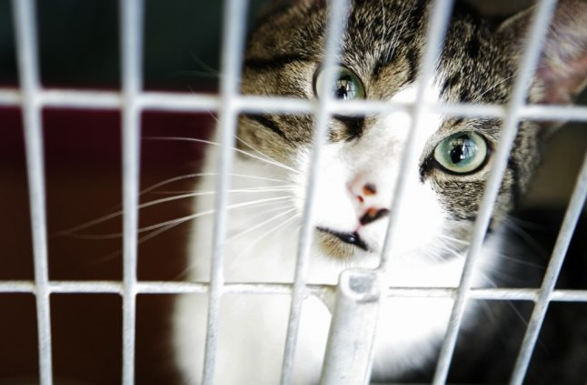 Travel between EU and UK: Pet owners warned about four-month waiting period