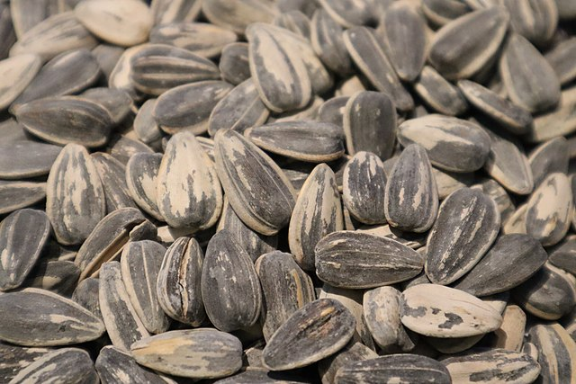 Spanish village bans eating sunflower seeds in public to stop Covid infections