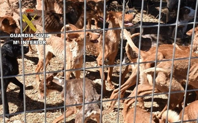 Spanish police rescue 41 starving dogs from farm near Toledo