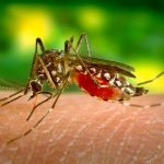 Cases of West Nile fever confirmed in Andalusia