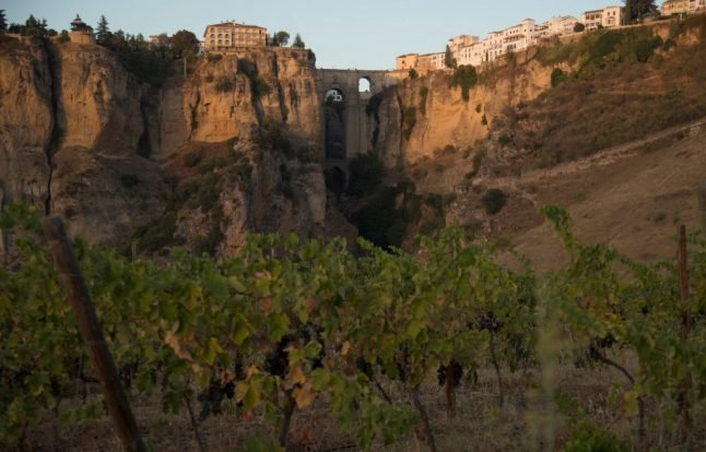 IN PICS: Spain's vineyards feel the pinch but harvest must go on
