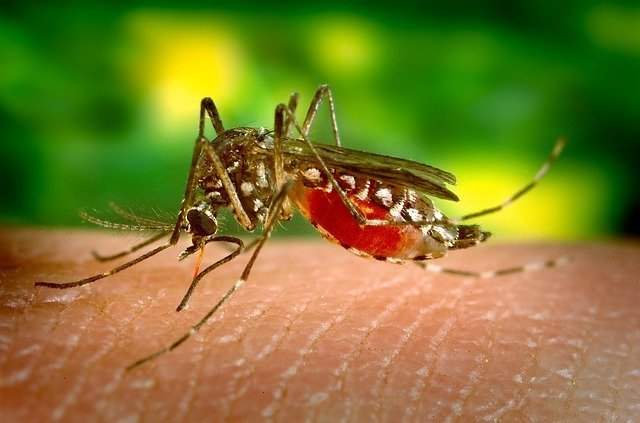 Death toll from West Nile outbreak in Spain climbs to four