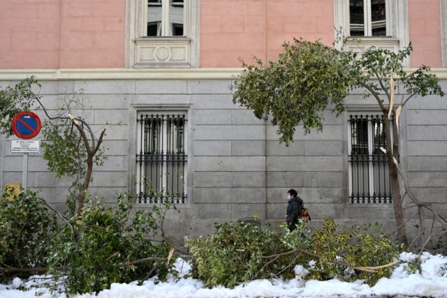 Why thousands of trees in Spain's capital are at risk of dying