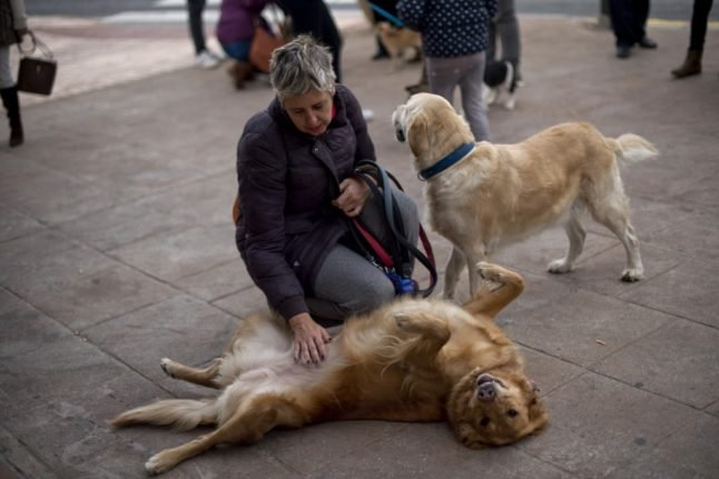 Spain will treat pets as 'living beings' and not 'objects' in custody battles