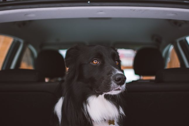 Reader question: What are the latest rules on travelling between Spain and the UK with pets?