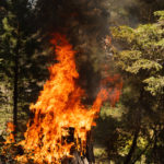 What to do and what to avoid if you witness a forest fire in Spain