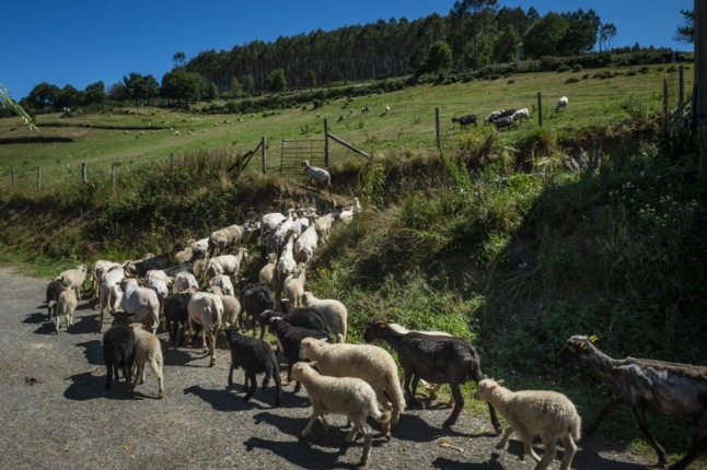 """Spanish town tells tourists to leave if they can't """"handle the risks"""" of rural life"""