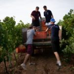 Uphill battle: Spain's wine growers forced to adapt to climate change