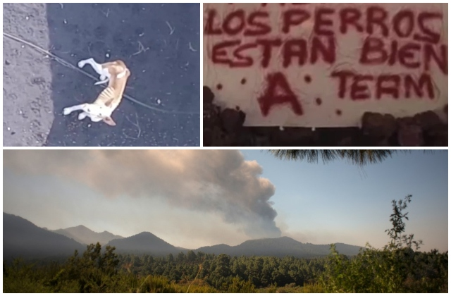 Who let the dogs out? Mystery disappearance grips Spain as La Palma volcano rages on